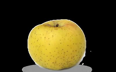 Nos pommes Chantecler
