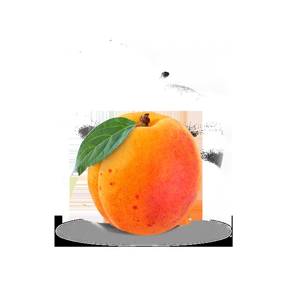 Abricot pour compote et jus