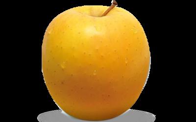 Nos pommes Tentation