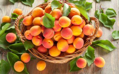 Début de la saison des abricots 2020